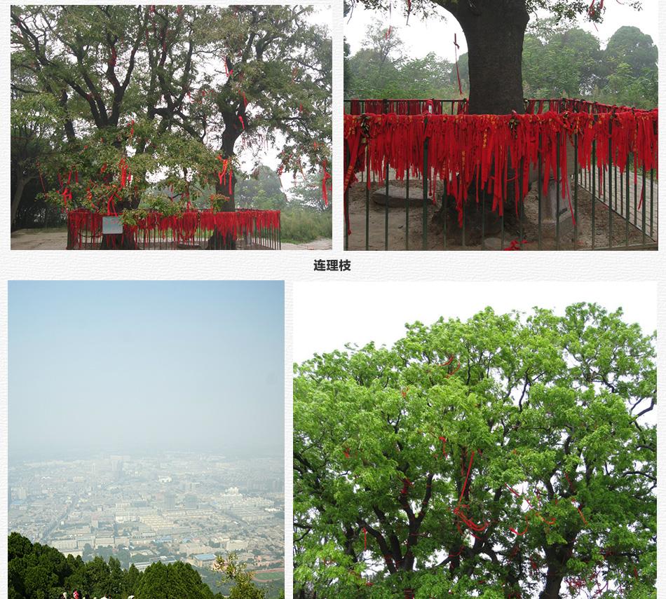 西安端午节旅游景点大全 西安端午适合去的旅游景点 陕西三日游华清宫