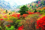 神农架徒步旅游线路 官门山和神农谷徒步游