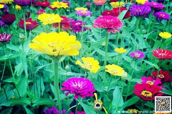微信头像花朵风景