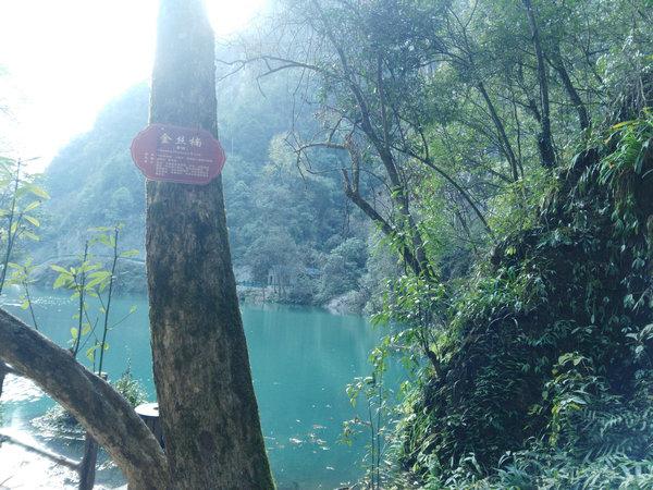 宜昌旅游楠木林风景区  宜昌旅游