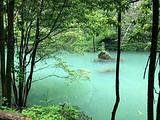 楠木林风景区一日游(宜昌夷陵区雾渡河中亚楠木林)