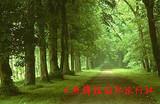 日照森林公园 刘家湾深度二日游