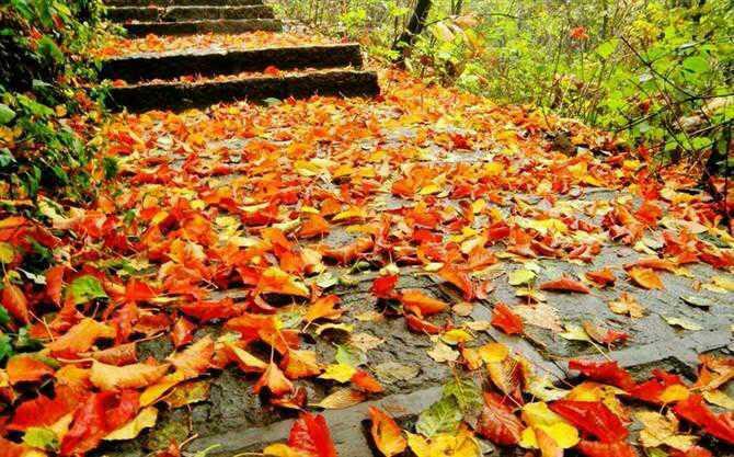 当季热推:秋天看红叶
