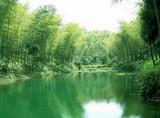 南山竹海 泰州老街溱湖湿地 溱潼古镇大巴三日