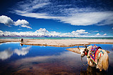 从青岛出发到 西宁青海湖、有氧列车、拉萨布达拉宫四飞一卧8天