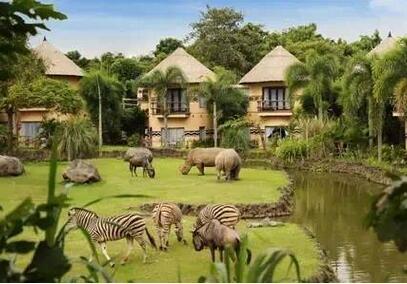 巴厘岛6日亲子游_夜宿野生动物园