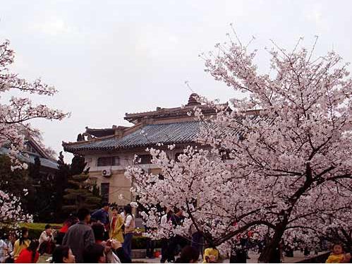 武汉大学樱花节是什么时间?