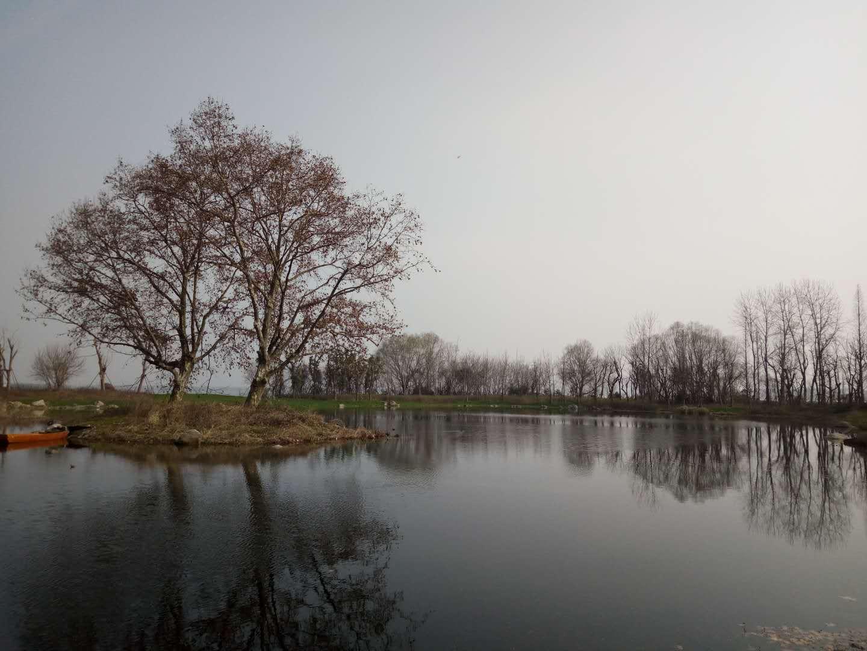 武汉春季乡村休闲采摘踏青游玩赏花最全活动攻略