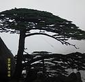 单位旅游独立成团 济南到黄山 千岛湖 杭州西湖4日游