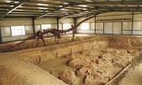 靈武恐龍地質博物館