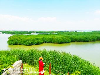 宁夏适合一日游的8个地方,让你嗨玩一整天?