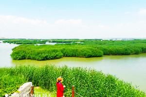 【经典宁夏A线】沙湖-镇北堡影城-枸杞园一日游