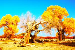 银川到额济纳旗、巴丹吉林沙漠、酒泉东风航天城、西夏王陵八日游
