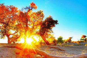 【巴丹吉林沙漠旅游】额济纳胡杨林-巴丹吉林沙漠深度摄影六日游