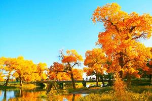 苍天圣地阿拉善月亮湖、大漠童话通湖草原、南寺、额济纳六日游