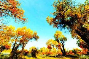 【尊享额济纳】额济纳胡杨林-黑水城-怪树林四日游(精致包团)