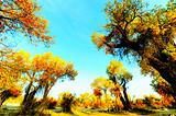【尊享額濟納】額濟納胡楊林-黑水城-怪樹林四日游(精致包團)