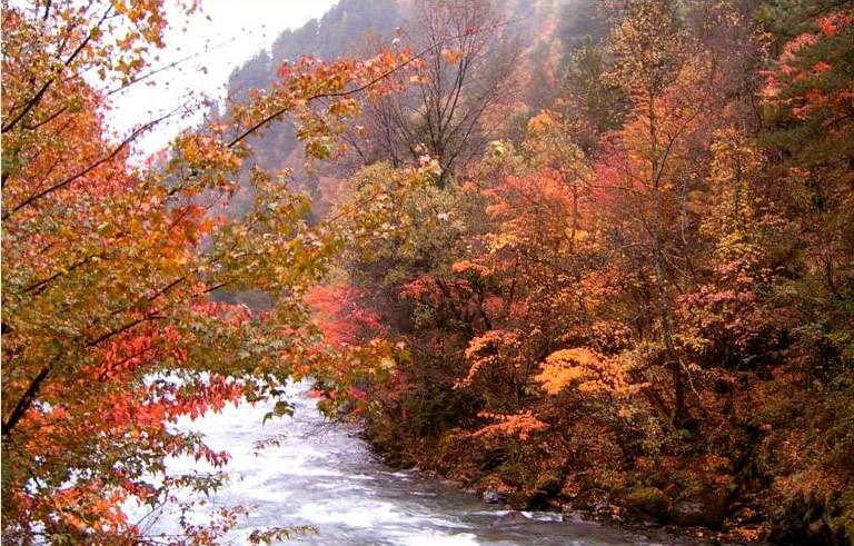 四川红叶旅游线路