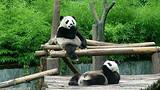 成都熊猫乐园双飞度假6日游