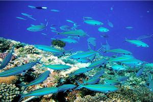 菲律宾长滩岛自由行6天