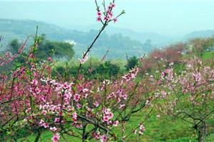 虎峰山桃花节、莲花湖一日游