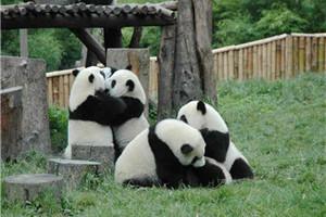 纯玩 都江堰+熊猫乐园VIP商务小包一日游