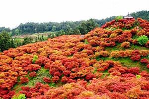 巴南五洲园赏四季红枫一日游