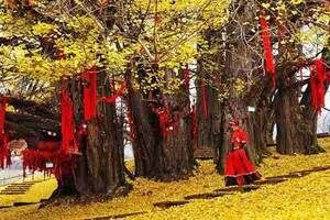贵州千年银杏村、云门囤景区、彝族篝火晚会2日游