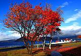 枫情北海道星野度假村半自由行5+1日