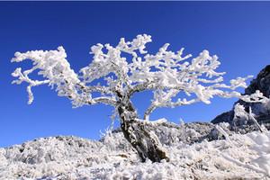 冰雪季|重庆周边金佛山滑雪纯玩一日游 含索道+观光车!