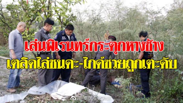 中国重庆领队为救游客被大象踩死