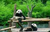 四川成都都江堰、熊猫基地纯玩一日游