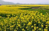 南川神龙峡、北固油菜花一日游