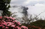 南川金佛山浪漫山花季一日