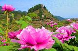 垫江恺之峰牡丹、美心小镇一日游