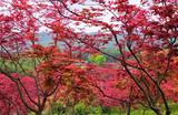 巴南·南湖多彩植物园、马桑溪古镇一日游