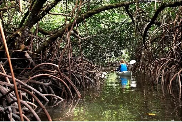 探索民丹岛度假胜地中的红树林