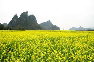 上林大龙湖游轮观光、百亩油菜花一日游