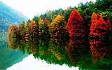 德保红叶森林公园、巴头多勾红枫林、小西湖露营二日游