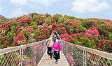 贵州毕节百里杜鹃风景区,甲秀楼,黔灵公园,下司古镇纯玩三日游