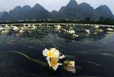 东兰烈士陵园、都安澄江海菜花、瑶台度假村、安福寺两日