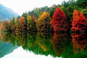 百色德保红叶森林公园枫叶、小西湖、吉星岩休闲二日游