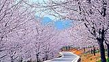 南宁出发贵州平坝万亩樱花、天龙屯堡纯玩纯摄影三日游