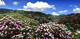 贵州平坝万亩樱花、青岩古镇、毕节百里杜鹃花纯摄影动车往返三日