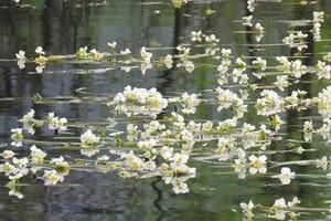 都安澄江河,一條會開花的河,安福寺純玩一日游