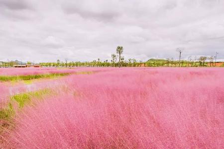 貴州青巖古鎮、山里南粉黛、韭菜坪、烏蒙大草原、雨補天坑四日