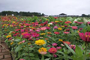 来宾开心农场,千亩花海,神奇蔬果世界一日游