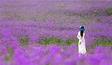 上林云姚花海,东红湿地,东敢湖纯玩一日游