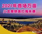 隆安金穗生态园万亩火龙果灯光秀3月5号正式开灯!