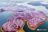 貴州平壩萬畝櫻花,青巖古鎮,金海雪山純玩三日游